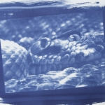 Chelsea Lancaster - Cyanotype