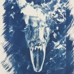 Nadia Brecl cyanotype