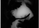 battaglioli Daniela - silhouette